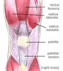 Muscle Tears | Vastus Lateralis Tendon Rupture & Treatment